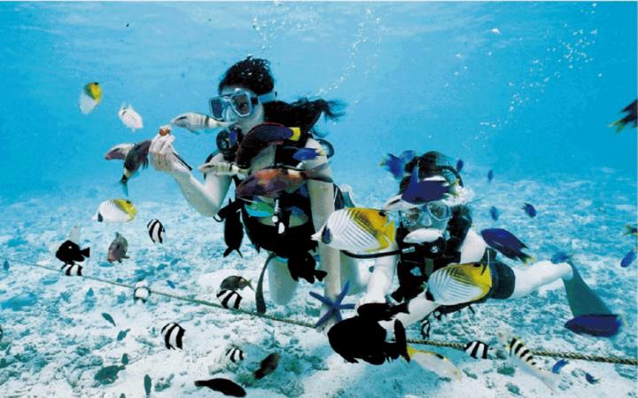 這裡的海水非常乾淨,透視度相當不錯,也是個適合體驗潛水的地方。