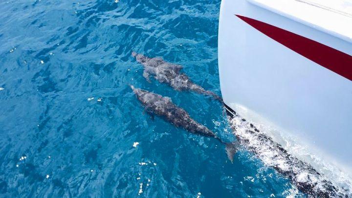 搭乘遊艇出海追蹤海豚。