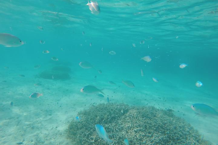 大片的珊瑚礁與大量熱帶魚,浮潛一定要選這啦!